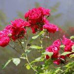 Ցնծության անձրևանոցը՝ իմ գրի ծածկոց…